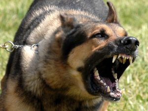 anger Shepherd