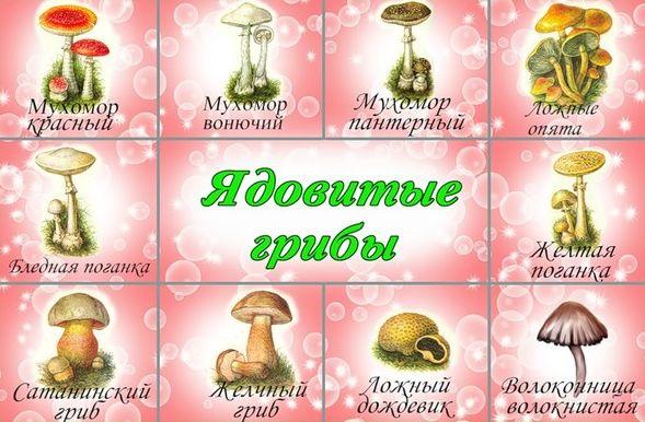 Ядовитые грибы и ягоды доклад 8876