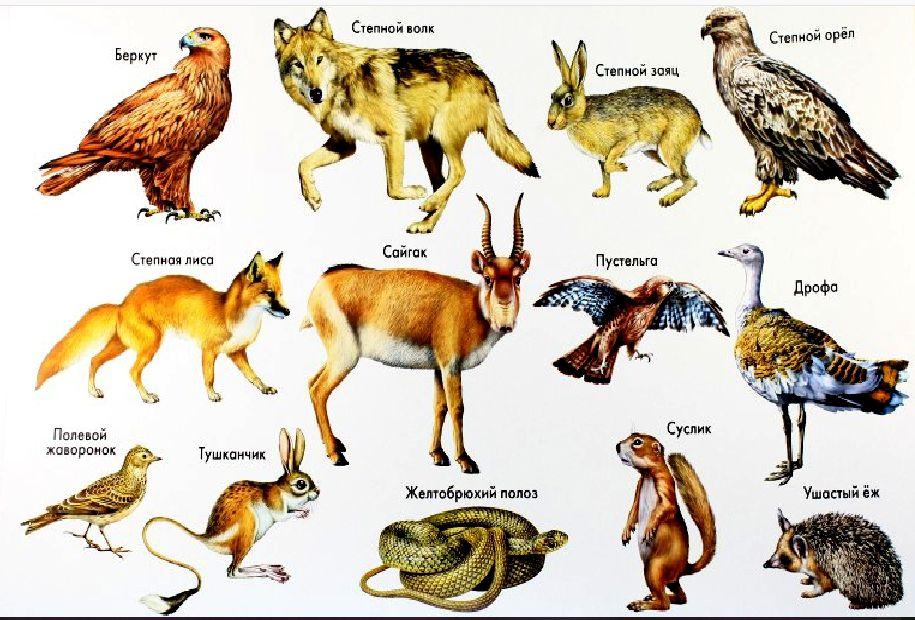 Реферат на тему животные степи 2322