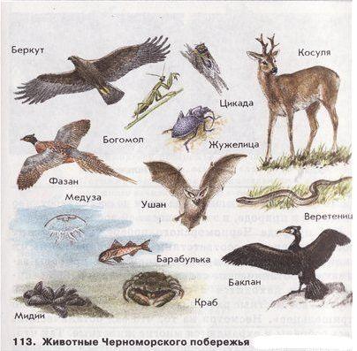 животные1